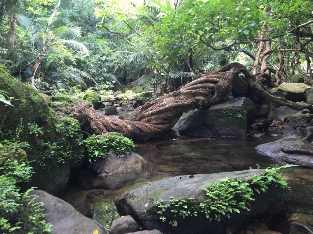 ジャングル(西表島)