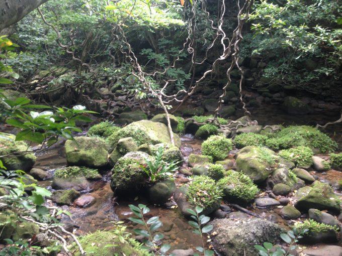 ジャングルのツルと苔