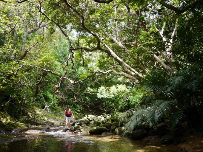 西表島ジャングル歩き
