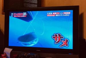 石垣島のサメ駆除