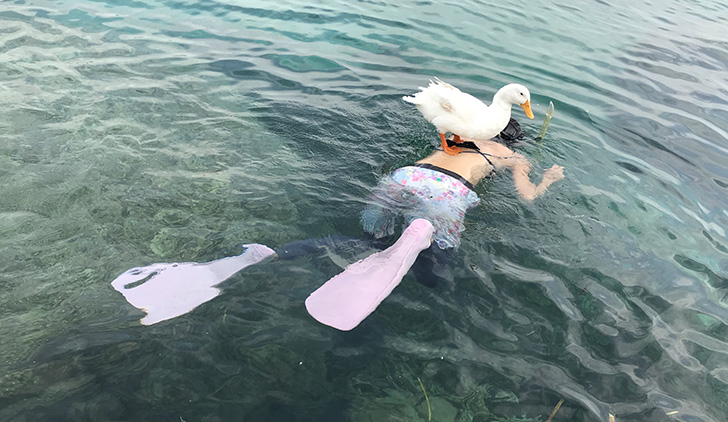 swim with duck in Ishigaki