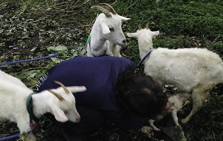 ヤギの乳がでない!?